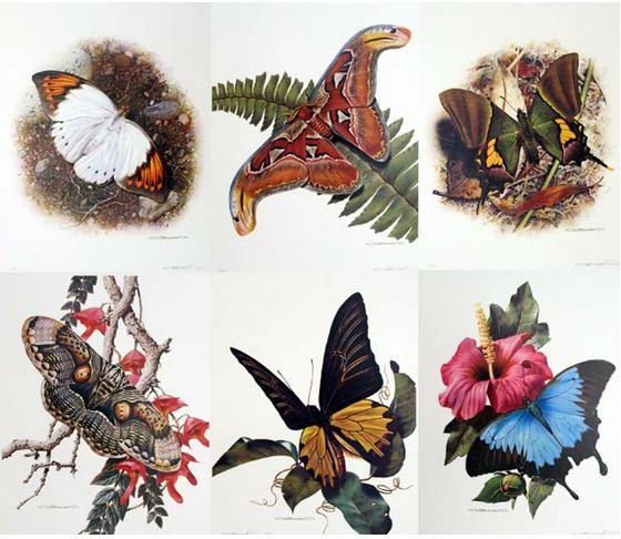 Анималистика Carl Brenders. Бабочки