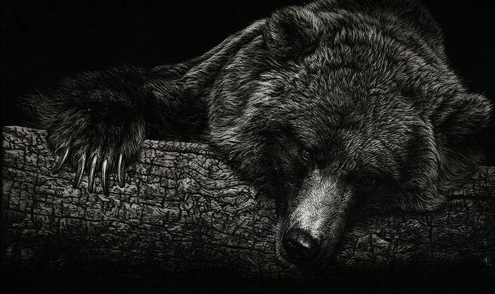 Художница Cristina Penescu. Гратография Grizzly Bear. 10х6 дюймов