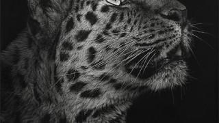 Художница Cristina Penescu. Гратография Northern Chintse Leopard. 12x12 дюймов