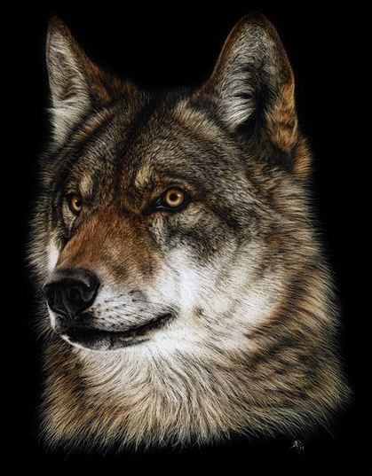 Художница Cristina Penescu. Гратография Wolf. 11x14 дюймов