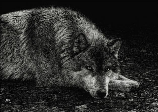 Художница Cristina Penescu. Граттаж Wolf. 5x7 дюймов
