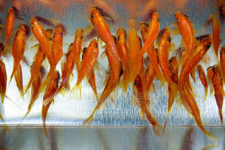 Трехмерная живопись Riusuke Fukahori. Картина девятая