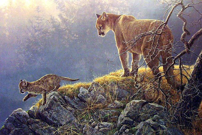 Robert-Bateman.-Animalisticheskaya-zhivopis.-Koshki