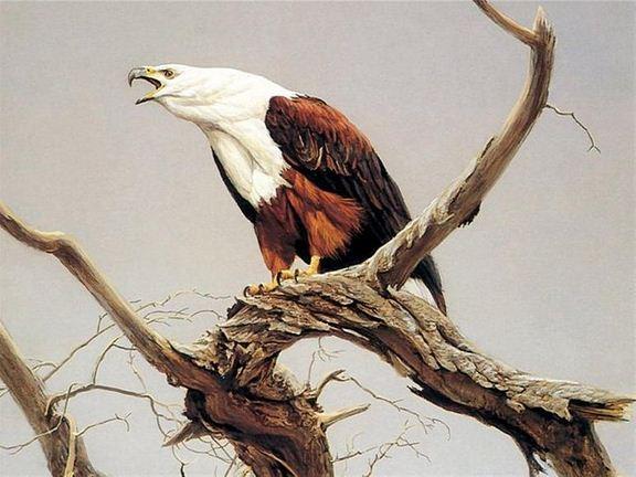 Robert Bateman. Анималистическая живопись. Орел