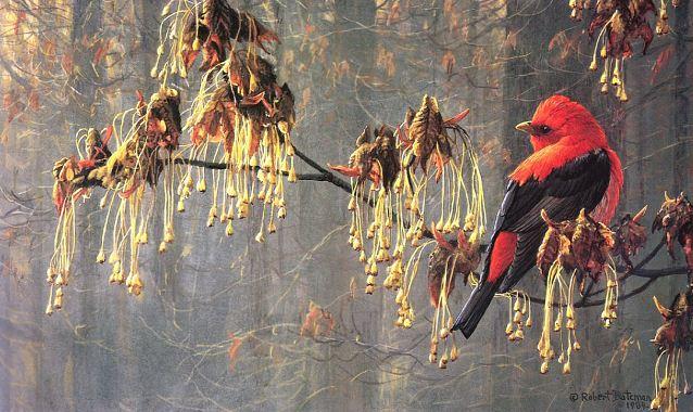 Robert Bateman. Анималистическая живопись. Птица