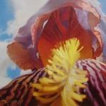 Чернигин Алексей. Картины написанные маслом. Ирис. 70х80 холст масло
