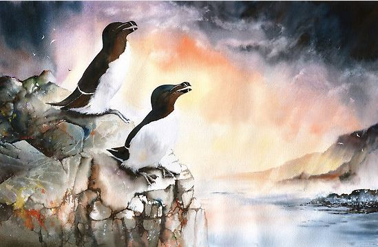 Peter Williams. Анимализм в акварели. Razorbills Rock