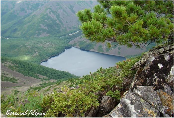 Озеро Омот. Кедровый стланик