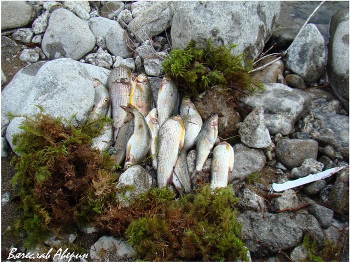 Река Герби. Рыбакам будет чем разнообразить маршрут