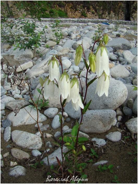 Река Герби. Там где воды поток весений был цветы расцвели