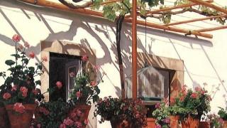 Художница JB Berkow. Цветы в Синтре. 16х20 дюймов холст масло
