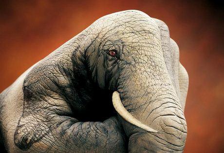 Slon.-Neobyichnoe-iskusstvo-Finger-painting