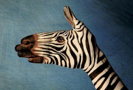 Zebra.-Neobyichnoe-iskusstvo-Finger