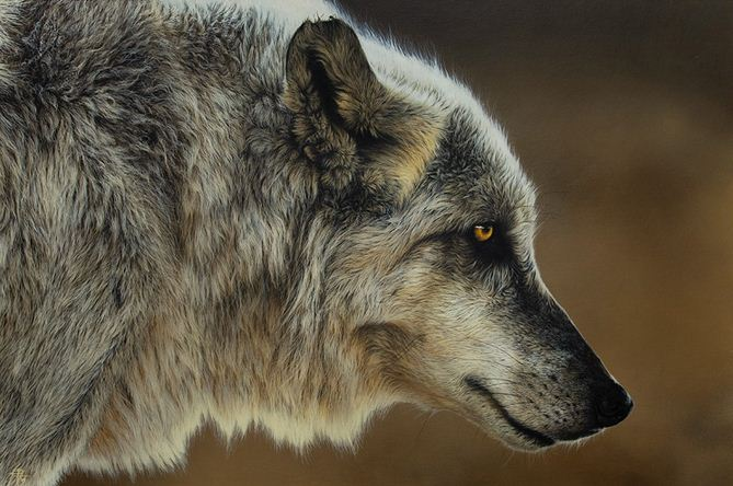 Художница Cristina Penescu.  Акрил Wolf. 24x36 дюймов