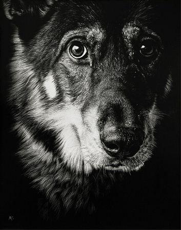 Художница Cristina Penescu. Гратография Wolf Dog. 11x14 дюймов