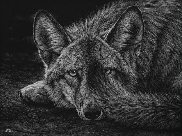 Художница Cristina Penescu. Граттаж Coyote. 9x12 дюймов