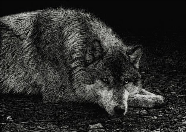 http://usenkomaxim.ru/wp-content/uploads/2012/07/Hudozhnitsa-Cristina-Penescu.-Grattazh-Wolf.-5x7-dyuymov.jpg