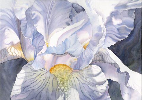 Hudozhnitsa-Marney-Ward.-Akvarel-Etherial-Iris.-21x29-dyuymov