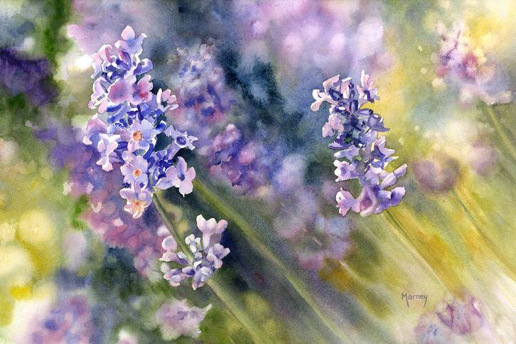 Hudozhnitsa-Marney-Ward.-Akvarel-Lavender.-14x21-dyuymov
