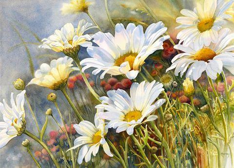 Hudozhnitsa-Marney-Ward.-Akvarel-Marguerite-Daisies.-21x29-dyuymov