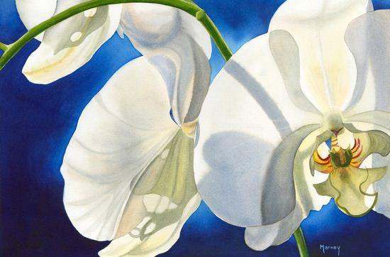 Hudozhnitsa-Marney-Ward.-Akvarel-Orchid-Glow.-14x21-dyuymov
