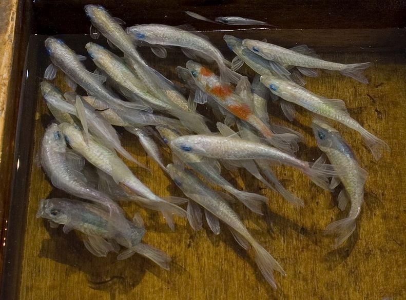 Трехмерная живопись Riusuke Fukahori. Картина четвертая. Фрагмент