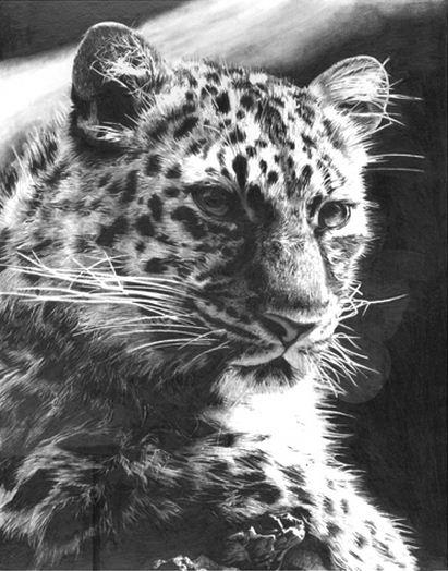 Lisandro-Pena.-Risunok-karandashom.-Leopard