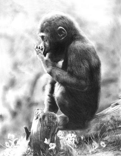 Lisandro Pena. Рисунок карандашом. Ребенок горилы