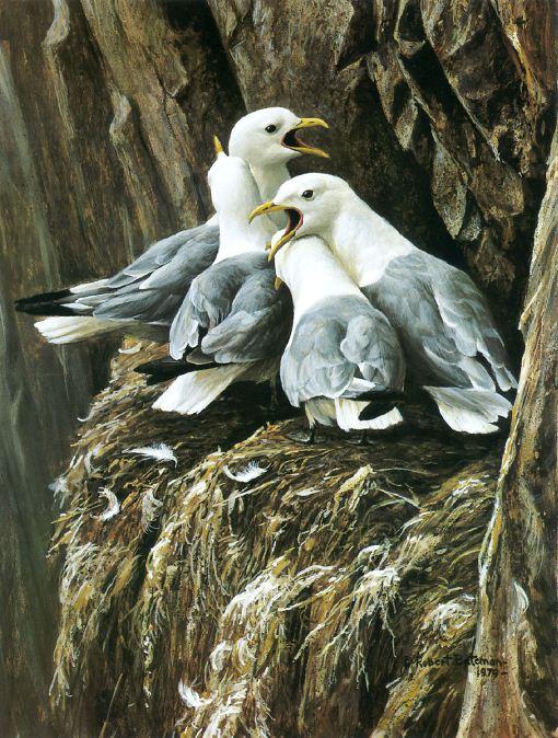 Robert Bateman. Анималистическая живопись. Чайки