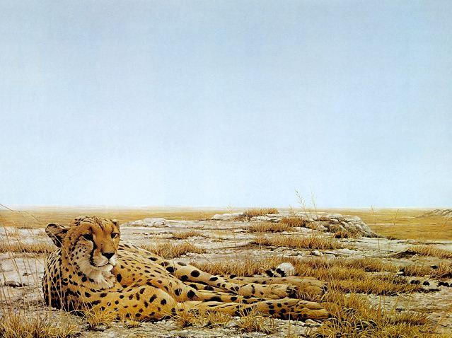 Robert Bateman. Анималистическая живопись. Гепард