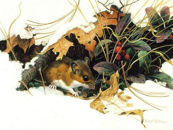 Robert Bateman. Анималистическая живопись.  Картина вторая