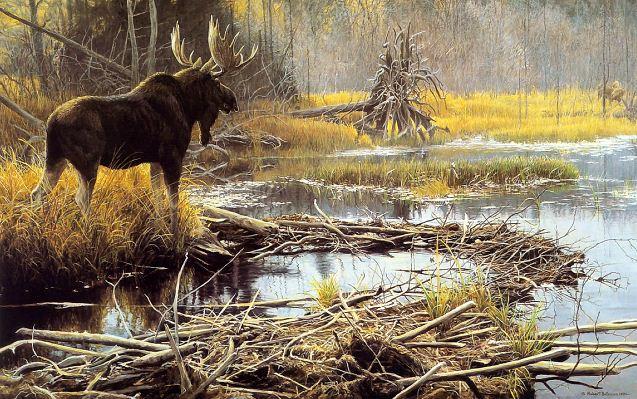 Robert Bateman. Анималистическая живопись. Лось