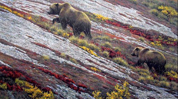 Robert Bateman. Анималистическая живопись. Медведи