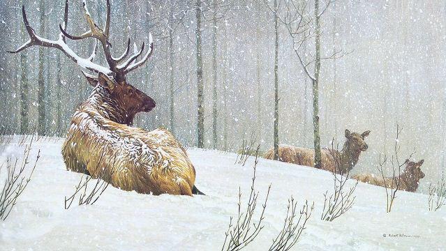 Robert Bateman. Анималистическая живопись. Олени