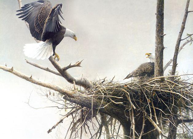 Robert Bateman. Анималистическая живопись. Орлы