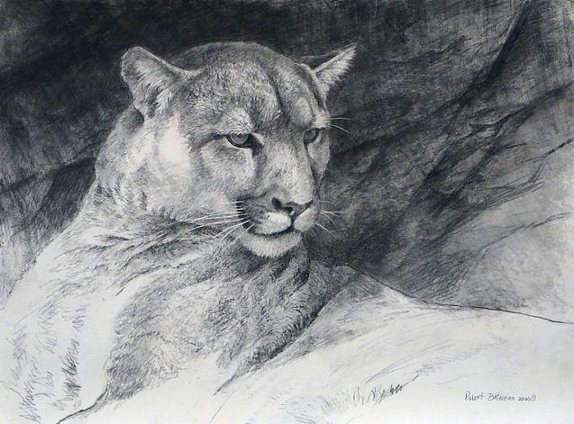 Robert Bateman. Анималистическая живопись. Рисунок первый