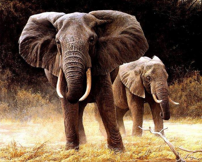 Robert Bateman. Анималистическая живопись. Слоны