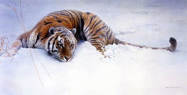 Robert Bateman. Анималистическая живопись. Тигр 2