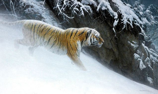 Robert Bateman. Анималистическая живопись. Тигр