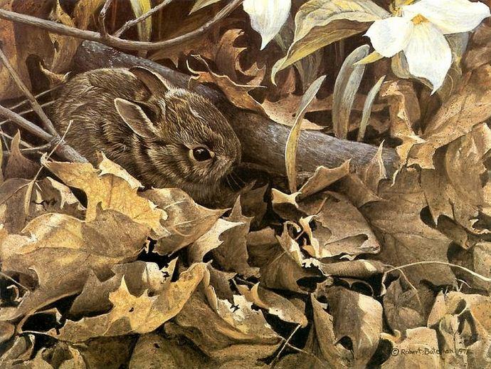 Robert Bateman. Анималистическая живопись. Заяц