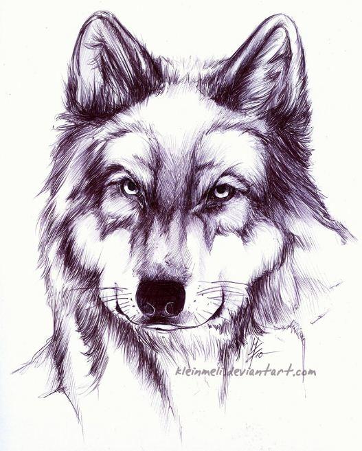 Mel Fischer. Рисунки шариковой ручкой. Волк