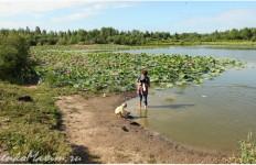 На границе с лотосами люди купаются. Дно илистое. Глубина достаточная
